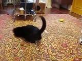 горностай против кота