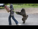 ПРЕДУПРЕЖДАЮ! Это самая смешная подборка видео про Животных _ Смех До Слёз!