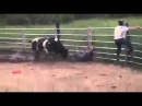 Not To Be Fucked With: Dude Messes With A Bull & Gets His Head Split Open! Warning Graphic