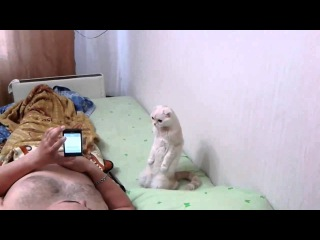 Patriotic russian cat listens to anthem standing up