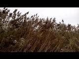 Травы на ветруТЭЦноябрь2015