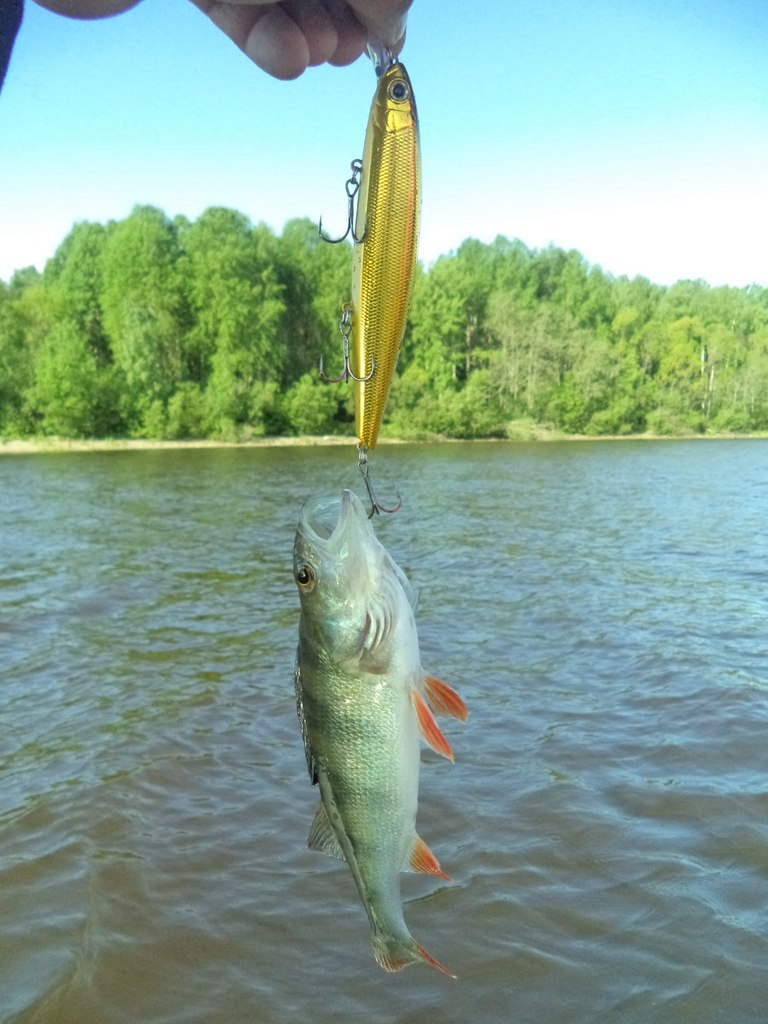 отчеты о рыбалке в вологодской