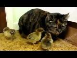 Лучшие Приколы С Животными Кошками Подборка Смех До Слез! Смешное видео про кошек!