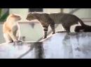 ПРИКОЛЫ С КОШКАМИ Лучшие и котами смеяться до слез! Танцующие животные приколы!