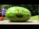 Надоедливый апельсин и 4 июля 29 серия Озвучка MiST