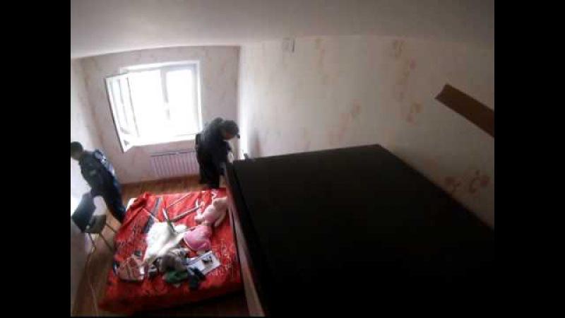 Челябинские спасатели поймали летучую мышь в одной из городских квартир