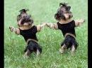 Приколы про животных,танцующие собаки 2014 смешные животные