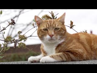 Тайная жизнь кошек / The Secret Life of the Cat (2013) [HD]