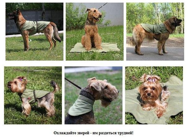 ПетСовет - зоотовары с доставкой по России O_LdZIBUSSY