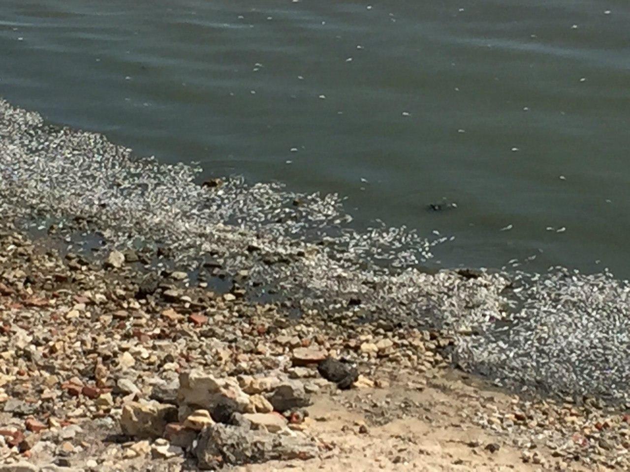Донская ветеринария: В Таганрогском заливе зафиксирована гибель рыбы