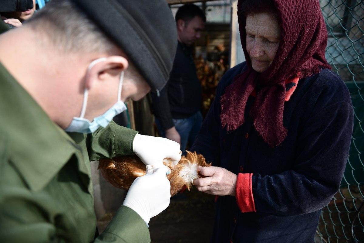 В Ростовской области ветеринарные врачи начали осеннюю вакцинацию сельскохозяйственных животных