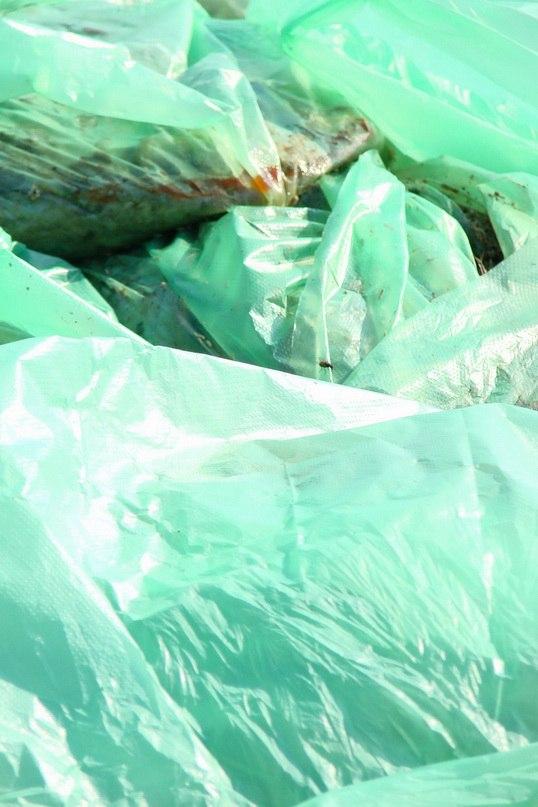 В Таганроге установили причину массового замора рыбы