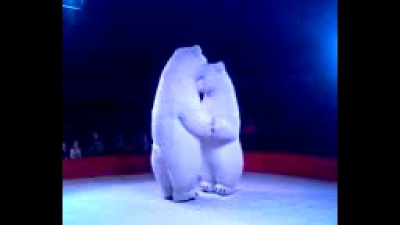 Впервые в Украине Белый танцующий медведь