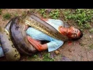 Biggest Anaconda Snake Attacks Man Caught On camera - Giant Anaconda attacks Human Real #2