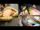 Giant Anaconda attacks Man