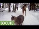 Suspicious cat hesitant to meet friendly deer