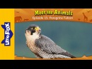 Meet the Animals 15 Peregrine Falcon Level 2 By Little Fox