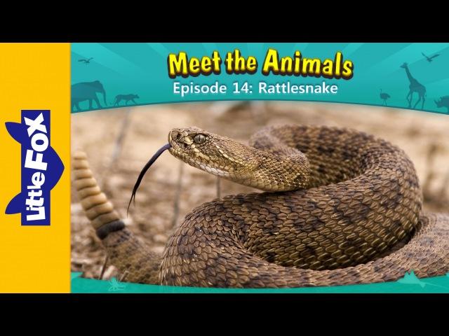 Meet the Animals 14: Rattlesnake | Level 2 | By Little Fox