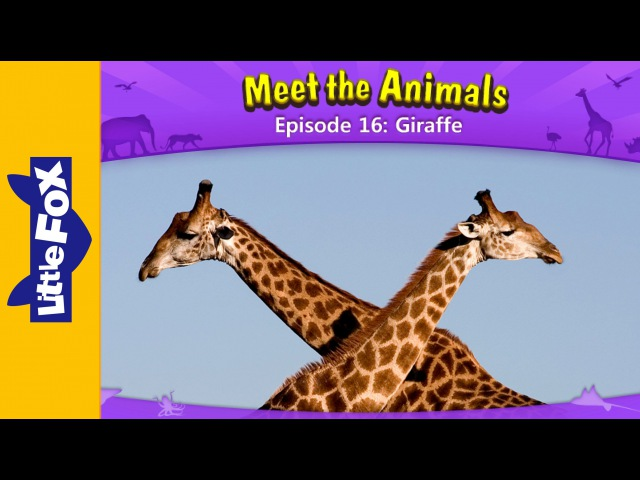 Meet the Animals 16   Giraffe   Wild Animals   Little Fox   Animated Stories for Kids