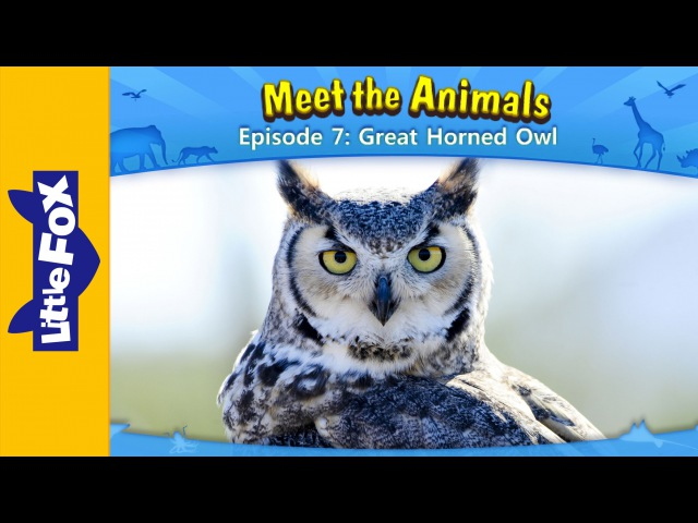 Meet the Animals 7: Great Horned Owl | Level 2 | By Little Fox