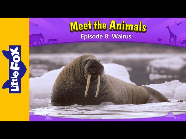 Meet the Animals 8 | Walrus | Wild Animals | Little Fox | Animated Stories for Kids