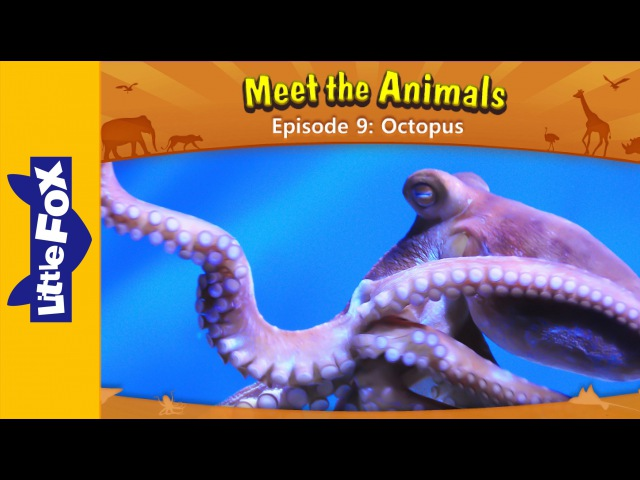 Meet the Animals 9 | Octopus | Wild Animals | Little Fox | Animated Stories for Kids