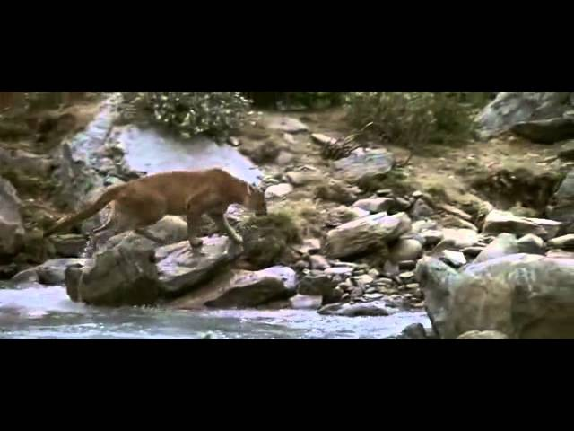 Отрывок из фильма Медведь (1988) L'ours