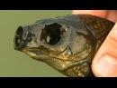 Страшные рыбы мутанты без глаз ШОК! ЖЕСТЬ!