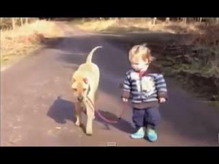 МАЛЫШ и ПЕС гуляют и ВДРУГ ЛУЖА!!! Приколы с детьми и животными