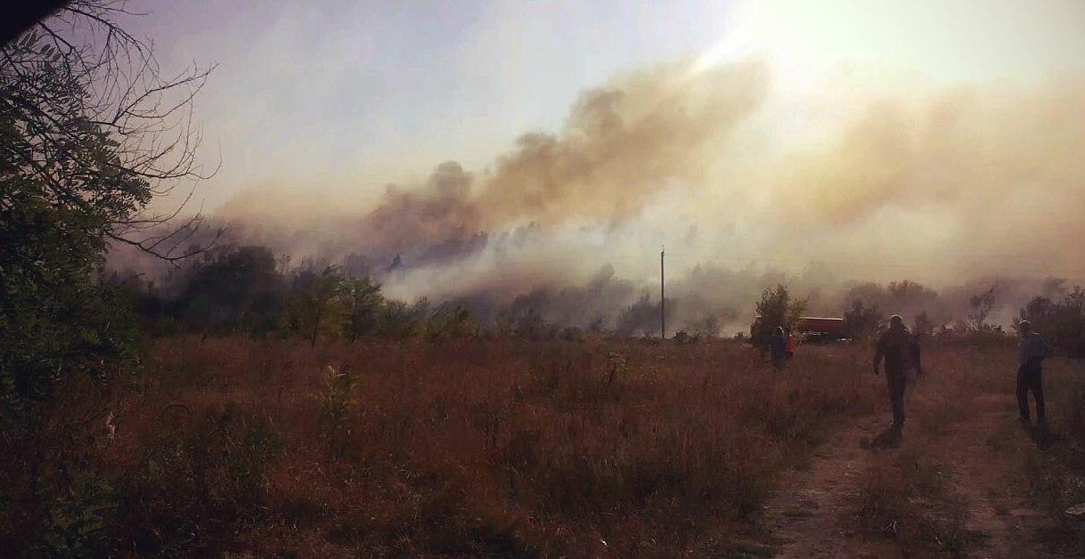 Под Таганрогом произошел крупный природный пожар, горел сосновый лес