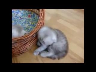 Самые Смешные Котята. Самые Смешные Котята Каких Я Видел