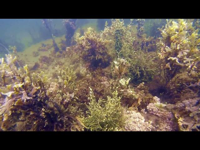 Подводный мир Белого моря (Карельский берег) - 2013. Первые пробы