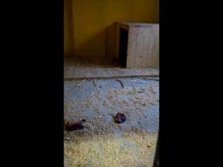 тайная комната зоопарка и её новый обитатель :) кормление!