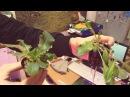 Led vs ДНаТ. Реальный тест на салате в гидропонике