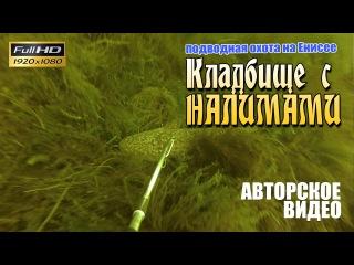Подводная охота, Енисей. Кладбище с налимами (2015, с озвучкой)