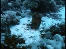 11 Одиссея Жака Кусто Коралловые джунгли
