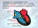 Работа сердца с пролапсом митрального клапана
