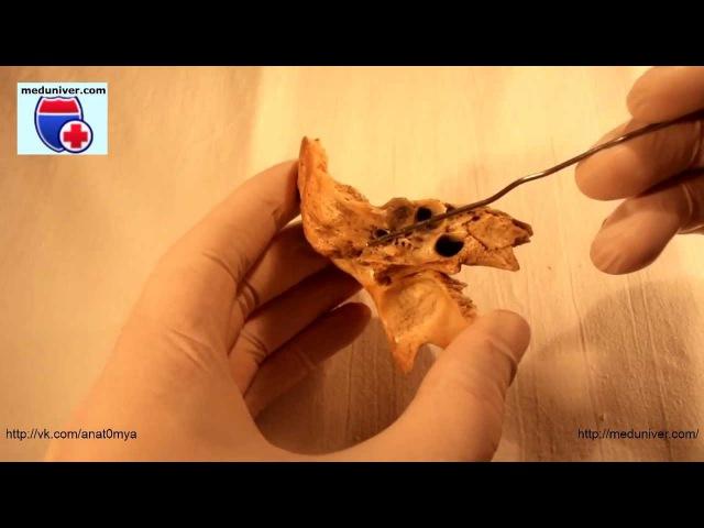 Canalis ossis temporalis. Анатомия каналов височной кости - meduniver.com