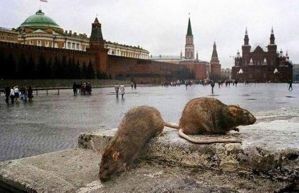 """РФ не сможет выйти из рецессии в ближайшие два года, - """"Сбербанк России"""" - Цензор.НЕТ 598"""