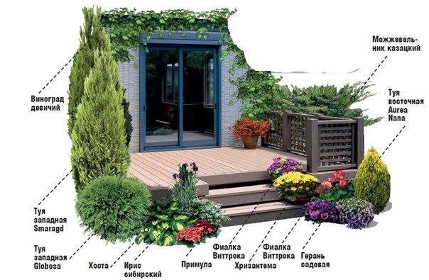 Схема растений для оформления