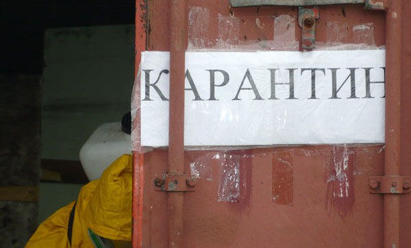 Под Таганрогом сняты карантинные ограничения по бешенству