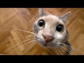 Смешное видео про кошек и котят на улице и в ванной