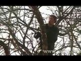 Обрезка плодовых деревьев. / Обучающее видео.