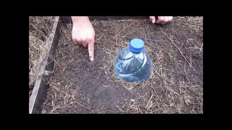 Соотношение гумуса и мульчи в коробах делянок