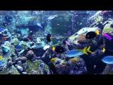 3 HOURS of Beautiful Coral Reef Fish, Relaxing Ocean Fish, Aquarium Fish Tank &amp Relax Music 1080p HD
