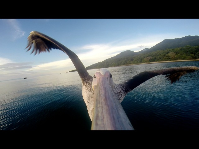 GoPro Pelican Learns To Fly