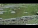 Анаконда против Крокодила