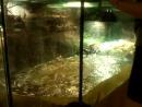 Кормление крокодила Гены на выставке Жизнь с холодной кровью