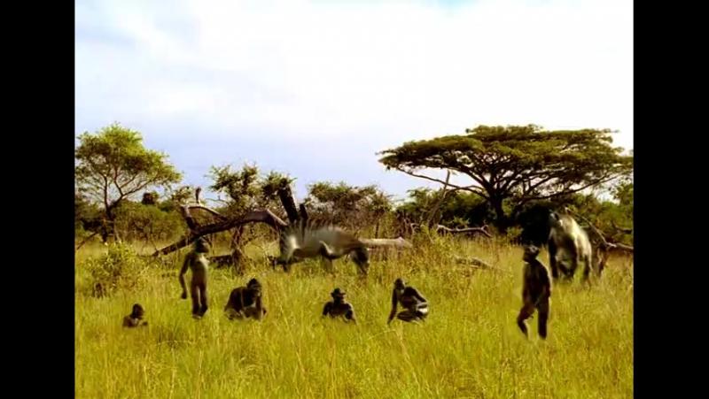 Сериал BBC_ Прогулки с чудовищами Walking with Beasts смотреть онлайн бесплатно!_4