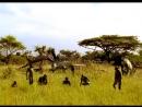 Сериал BBC Прогулки с чудовищами Walking with Beasts смотреть онлайн бесплатно 4